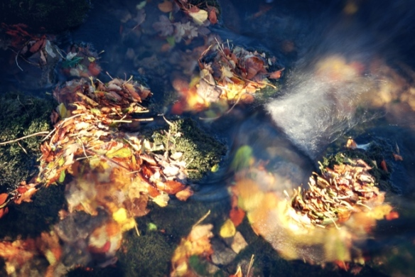 The way autumn leaves gather together in rushing water.