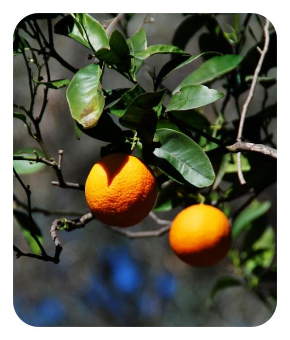 Object 1: An Orange