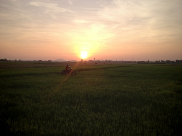 The sun sets over a rice paddy  outside Siem Reap.